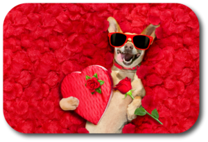 Valentines Day offers a great opportunity to strengthen your bond with your dog