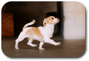 Training your puppy to follow you is based on focus, consistency, and repetition.
