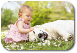 Never allow your baby or dog to make the final decision when they are together