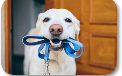 What Kind of Leash Should I Use with my Dog?