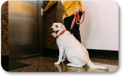 What Do I Do When My Dog is Nervous Riding in the Elevator?