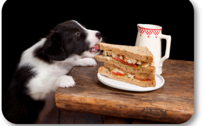 How Do I Stop My Dog Stealing Food?